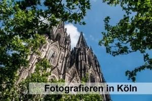 Umrahmt von Blättern ragt der Kölner Dom vor blauem Himmel in die Höhe