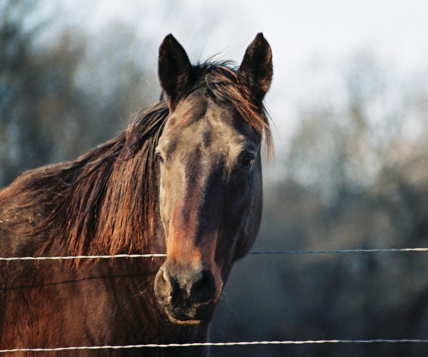 Tierfotografie eines Pferdes_1