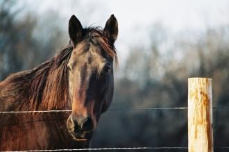 Pferd das über den Zaun schaut